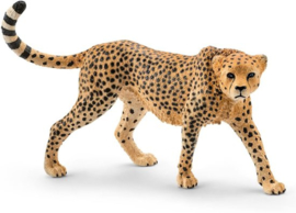 Luipaard wijfje