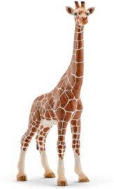 Giraffe wijfje