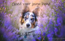 Goed voor jouw hond én de wereld
