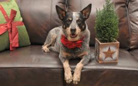Kerstcadeautjes voor jouw hond