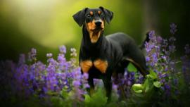 Dierendag | Hoe ga jij je hond verwennen?
