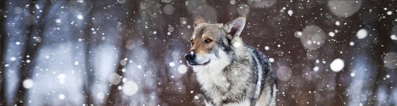 Winter bij Het Wolfje