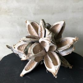 Natuurlijk decoratiemateriaal- sororoca kop