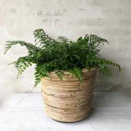 Plantenpot waterdicht- groot 35x30