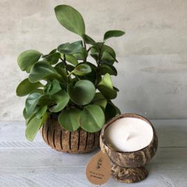Kokosnoot bakje