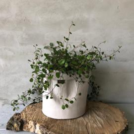 Ecofriendly bloempotje licht grijs (egaal) 17x17