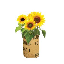 Zelf zonnebloemen kweken