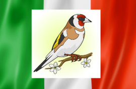 Blattner Goldfinch Major Italia 1kg (Stieglitz-Major Italia)
