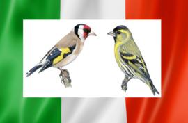 Blattner Putter - Sijs Italië Mix 1kg (Stieglitz-Zeisig Italia NEW)