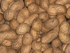 Blattner Arachide non Pelée 1kg (Erdnüsse i. d. Schale)