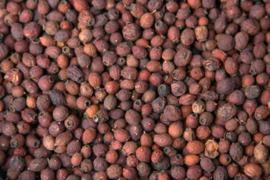 Blattner Bacche di Biancospino 1kg (Weißdornbeeren getrocknet )
