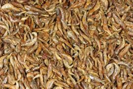 Zoetwater garnalen gedroogd 250gram (Süßwasser Shrimps - Garnelen getrocknet)