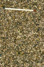 Blattner Graines de Chanvre 1kg (Hanf - EU Herkunft)