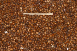 Blattner Graines de Dari Rouge 1kg (Milokorn rot)
