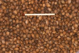 Blattner Graine de Cerisier des Oiseaux 1kg (Traubenkirsche)