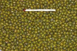 Blattner Mungbonen 1kg (Mungbohnen)
