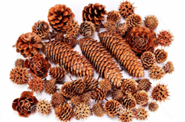 Blattner tree seeds