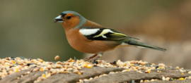 Blattner Wildzang Speciaal 1kg (Waldvogel-Spezial)