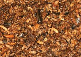 Blattner Honing Delicatesse 500gram (Delikat Honig)
