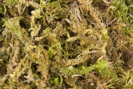 Nesting Material Moss 100gram (Moos (100 g)