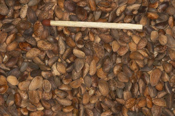 Blattner Aleppo zacht grof (Dennenzaad) 2,5kg  (Kiefernsamen grob - weichschalig)