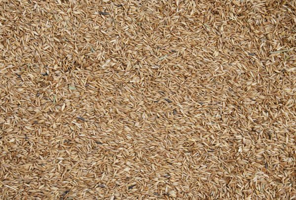 Blattner Meadow Grass 2,5kg (Wiesenrispengras)