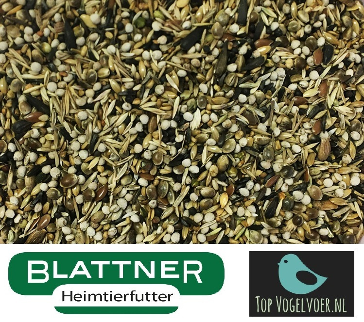 Blattner Goldfinch Major Italia 2,5kg (Stieglitz-Major Italia)
