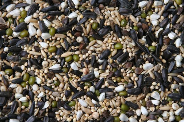 Blattner kiemzaad kleine parkieten 15kg (Keimfutter für Kleinsittiche)