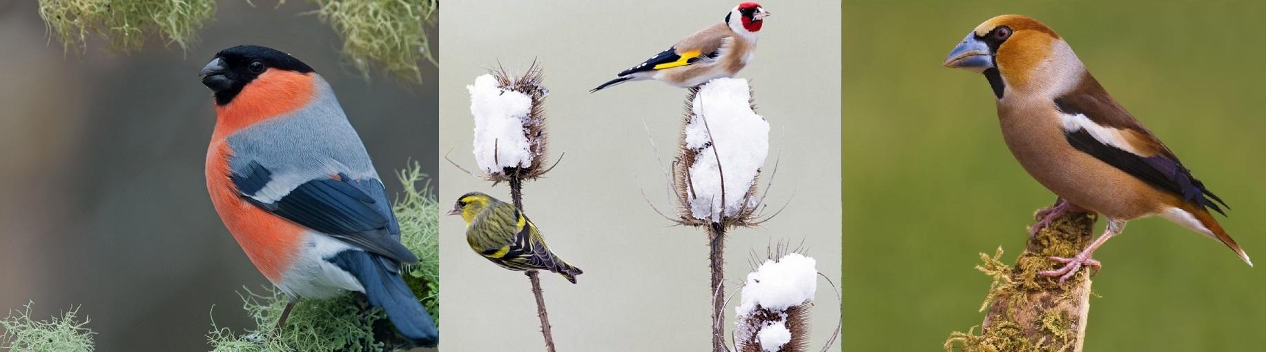 Wildzang vogels