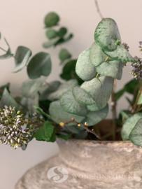 Eucalyptus takken