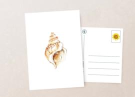 Postkaart | Schelp