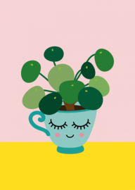 Postkaart | Pilea pannenkoekplant
