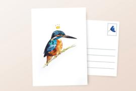 Postkaart | IJsvogel