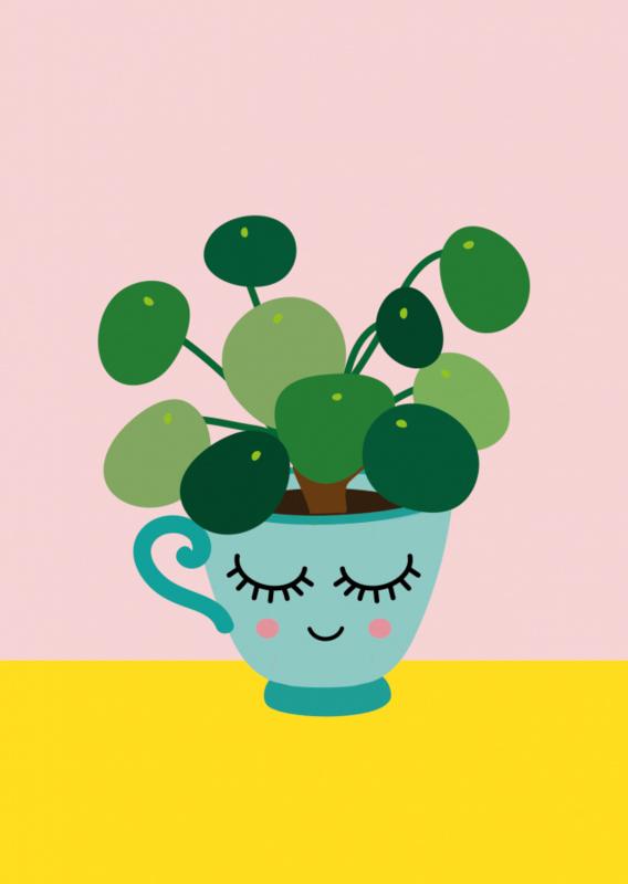 Postkaart   Pilea pannenkoekplant