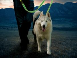 Night Dog Lichtgevende LED Hondenriem Geel