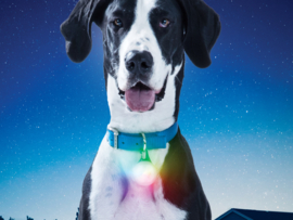 Oplaadbare Multicolor Lichtgevende Led Honden Halsbandlamp Oplaadbaar