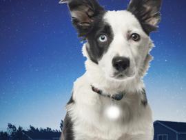 Mini Lichtgevend Honden Halsband Lampje Riemlicht Wit
