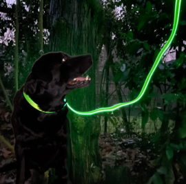 Night Dog Lichtgevende LED Hondenriem Geel