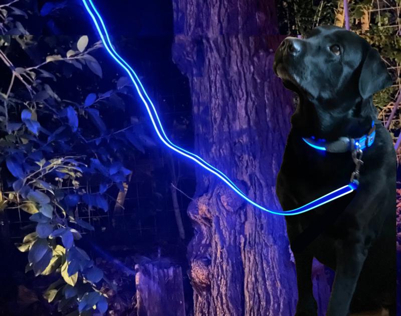 Night Dog Lichtgevende LED Hondenriem Blauw