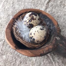 Nestje met kwarteleitjes