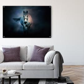 Wit paard tegen sterrenhemel