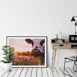 Poster koe