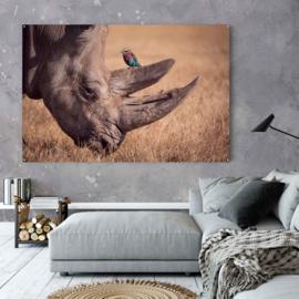 Neushoorn met vogel in natuurlijke omgeving