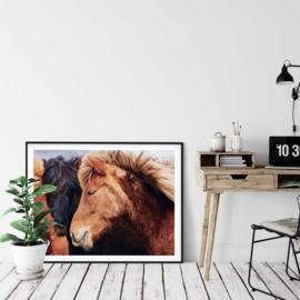 Paarden poster