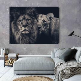 Lion couple op aluminium dibond, 140x110cm zonder ophangsysteem
