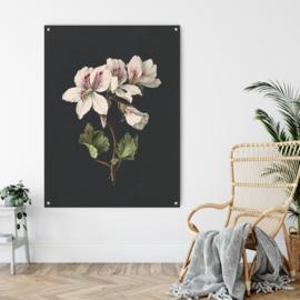Dubbelzijdige kunst: Pelargonium met het schitterende boeket met bloemen