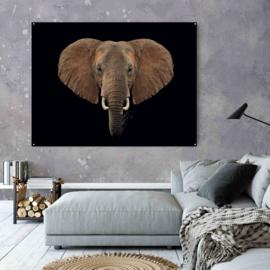 Olifant tegen zwarte achtergrond