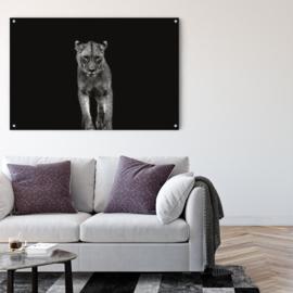 Portret van een jonge Leeuwin