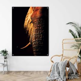 Red elephant hoog