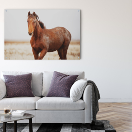 Wild paard in natuurlijke omgeving